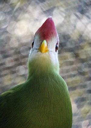 POCA POSTCARD Birdy | colour | Love bird