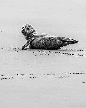 POCA POSTCARD seal | black white |Hi YOU!