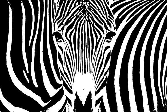 POCA POSTCARD Zebra | black white | STRIPKE VEUR