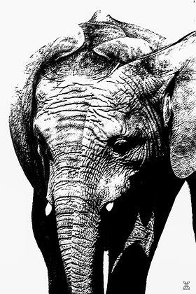 ART ON YOUR WALL - Elephantasia