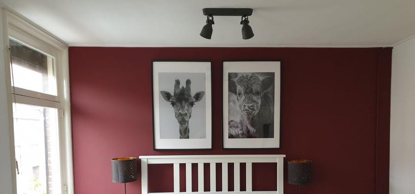 Giraf & schotse hooglander kalf