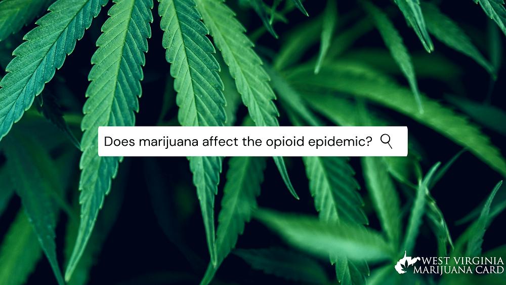 does marijuana affect the opioid epidemic?