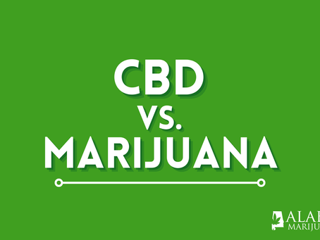 CBD vs Medical Marijuana: Which is Right for Me?