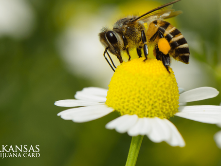 Can Cannabis Trees Save The Bees?