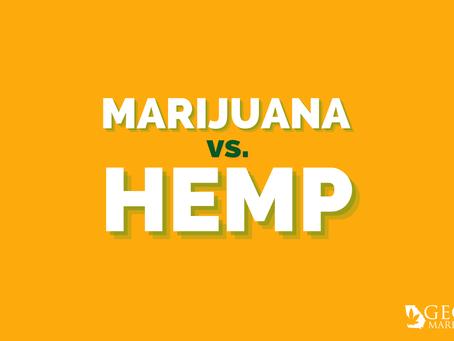 Georgia Marijuana Card Guide: Medical Marijuana vs CBD