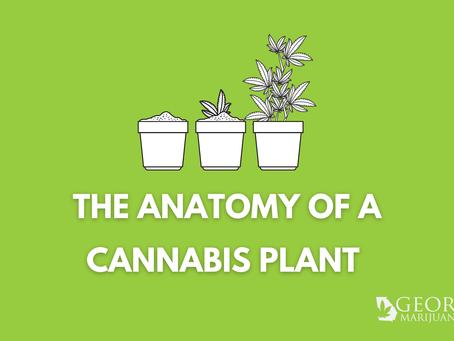 The Anatomy & Language of The Cannabis Plant