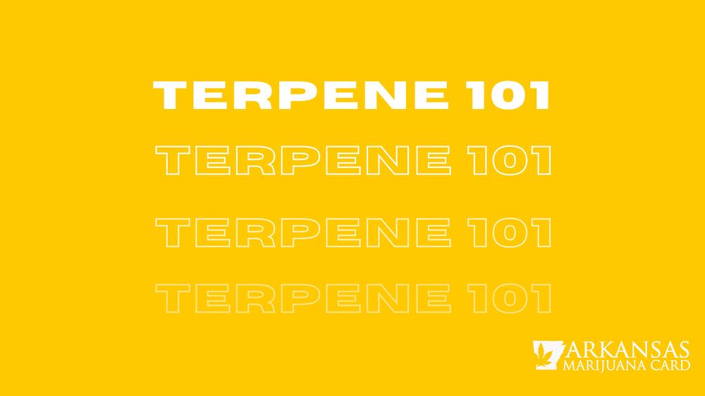 terpene 101
