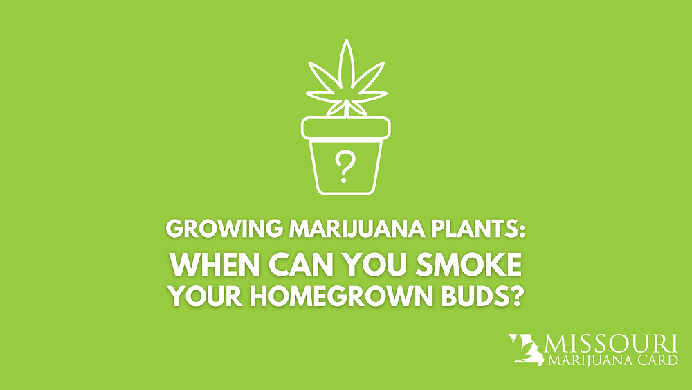 Growing Your Own Medical Marijuana? When Can You Smoke Your Home Grown Buds?