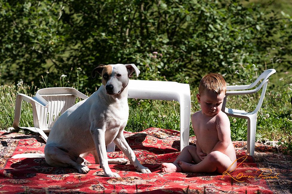 Dog photography / France