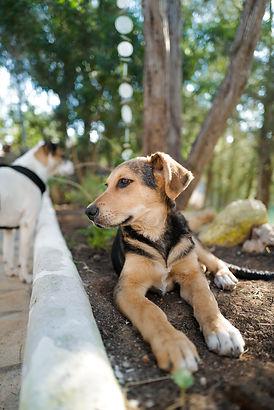 Dog from Ibiza