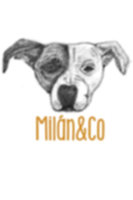 dog, photographie, milan&co, argentina, education, dog training, rescuedog