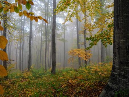Pădurea fermecată a munților Baraolt