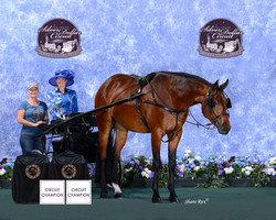 Circuit Champion Las Vegas March 2015 -
