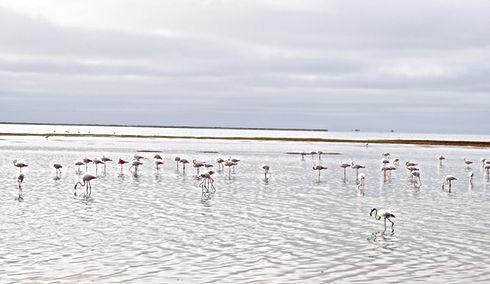 flamingos-3839882.jpg
