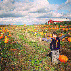 Child in large pumpkin patch
