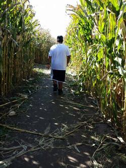 Teenage boy walking corn maze