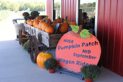 Pumpkin on display with sign