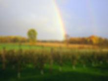 Rainbow bending over orchard