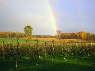 Rainbow bending over orchard