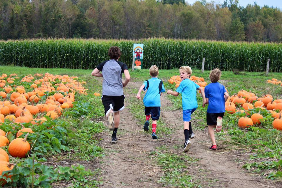 pumpkin patch leading into the maze