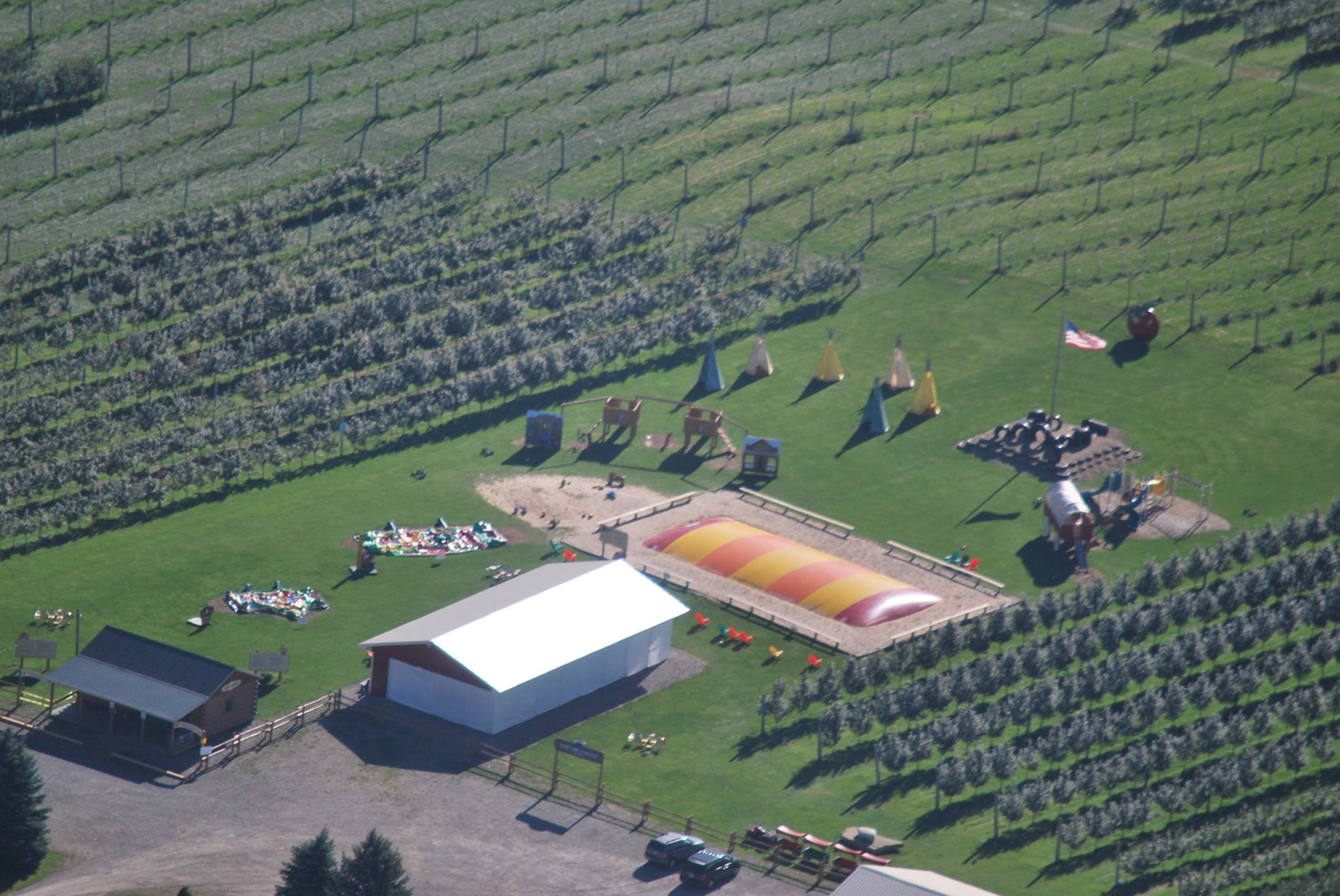 Aerial view of apple orchard