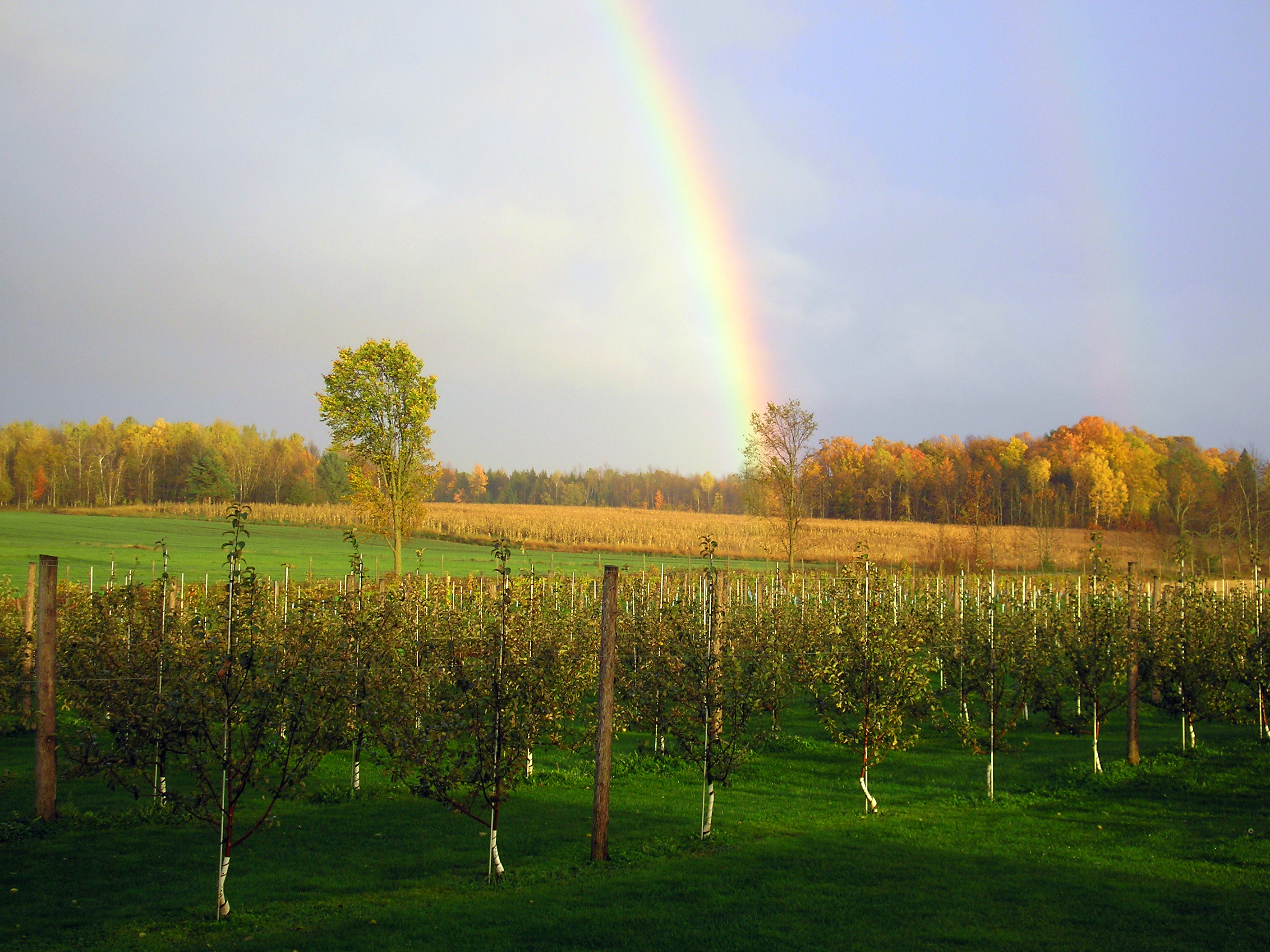 Rainbow over Fobare's Fruits Farm