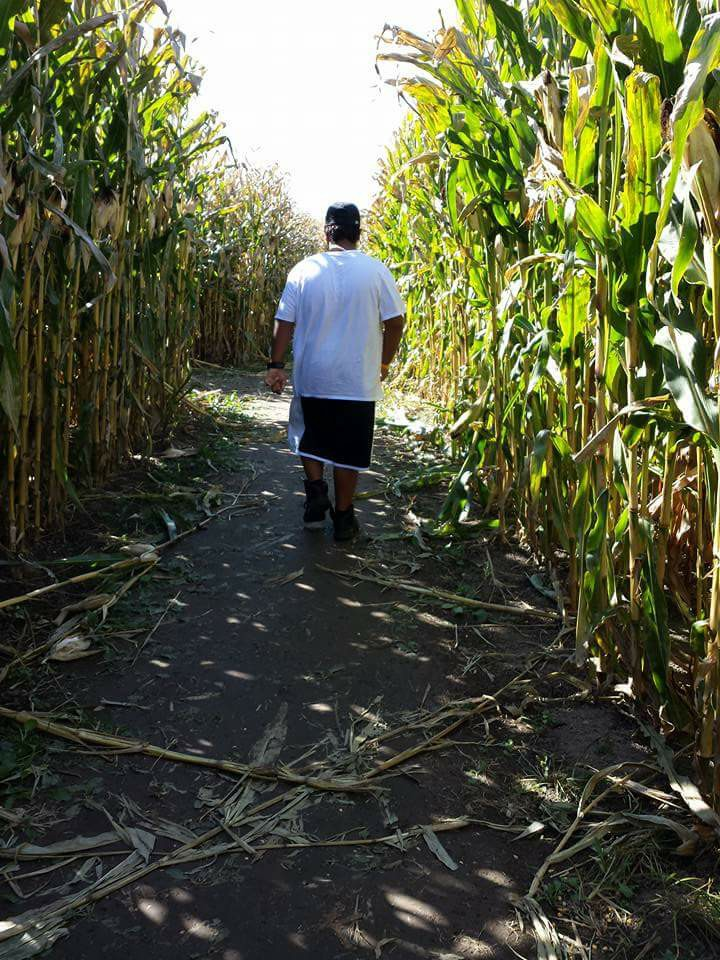 Boy walking through corn maze