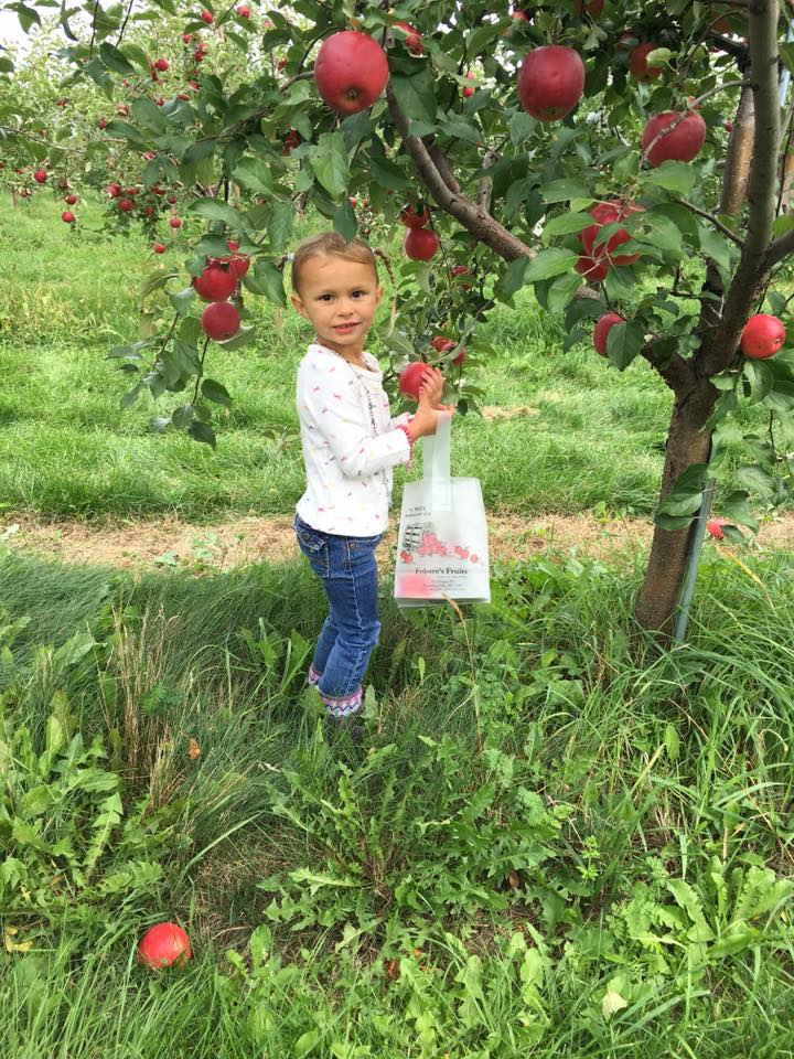 Girl picking apple from our upick