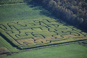 Aerial photo of corn maze