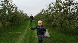 Child running through apple orchard
