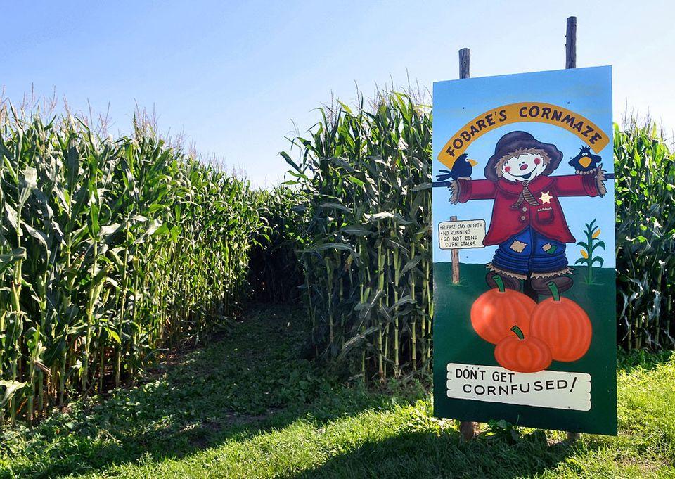 Entrance sign to corn maze