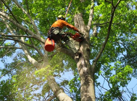 madison-tn-tree-service-company_orig.png