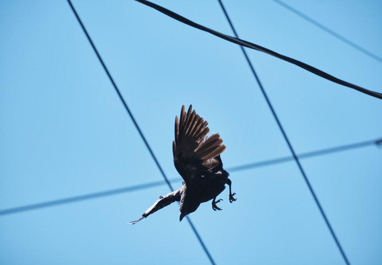 09 28 Ravens DSCF8952_1.jpg