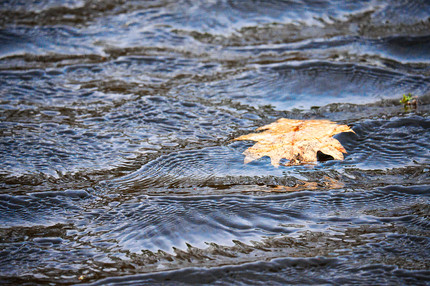 Leaf in Textured Water