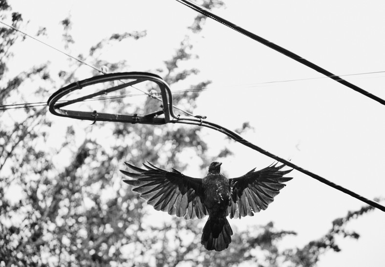 09 24 Birds DSCF8492.jpg