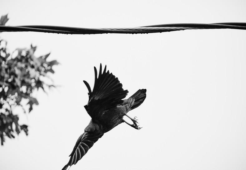 09 26 Rain Birds DSCF8665.jpg