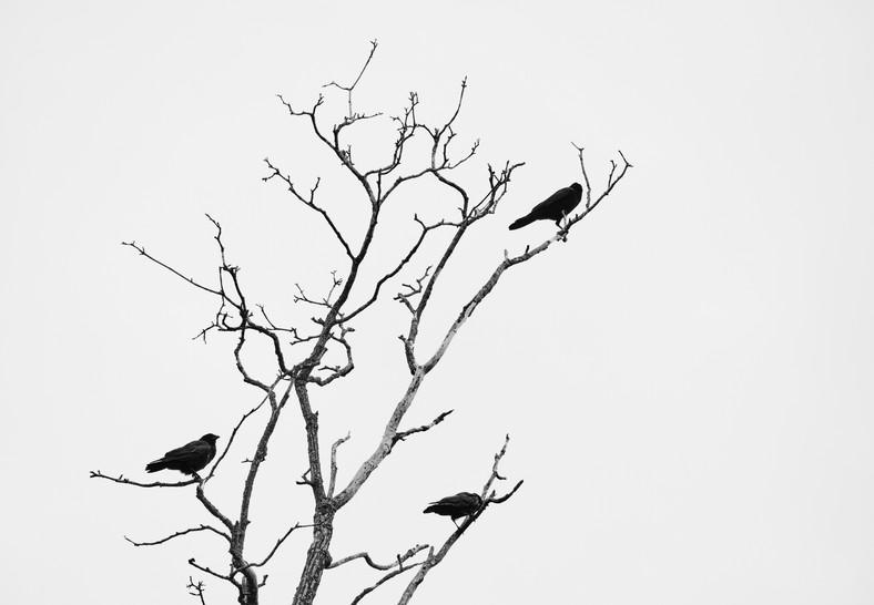 09 19 Cloudy Day Birds DSCF8042.jpg