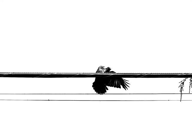 07 19 Crows _DSF4581.jpg