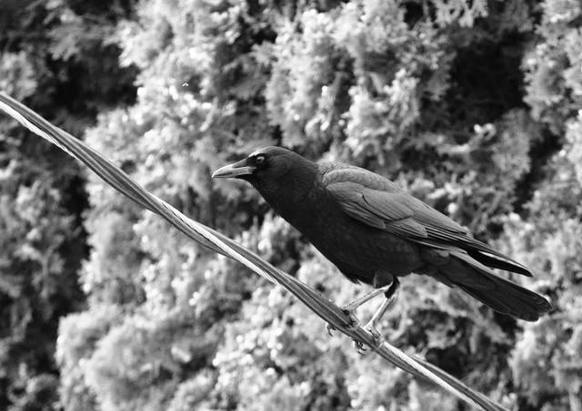 06 03 Evening Birds DSCF1559.jpg