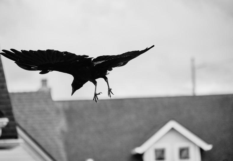 09 24 Birds DSCF8440.jpg