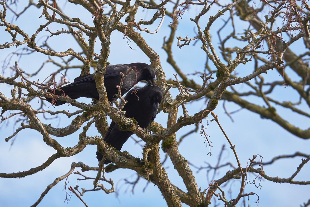 02 23 Birds DSCF3607.jpg