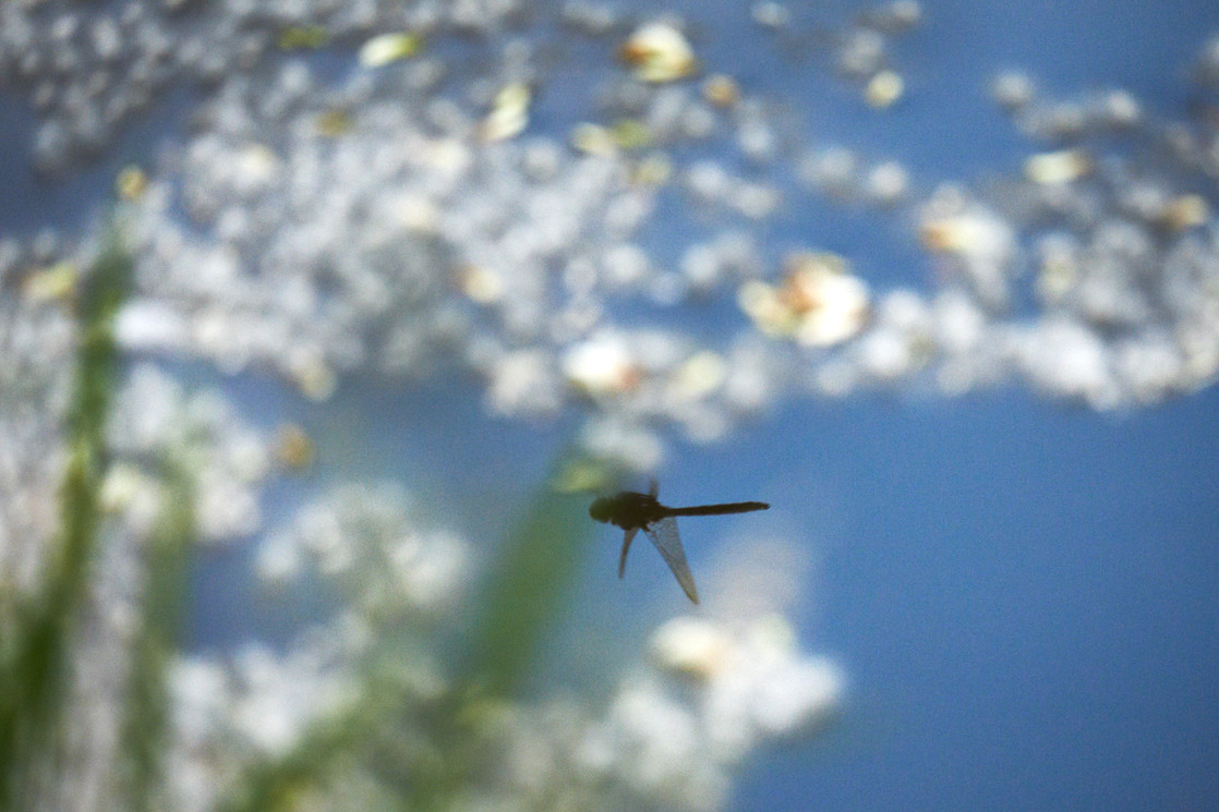 A Reflected Dragonfly