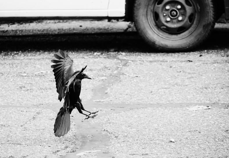 09 24 Birds DSCF8444.jpg