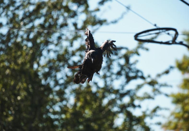 09 28 Ravens DSCF8956_1.jpg