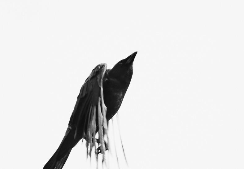 09 27 Afternoon Birds DSCF8819.jpg