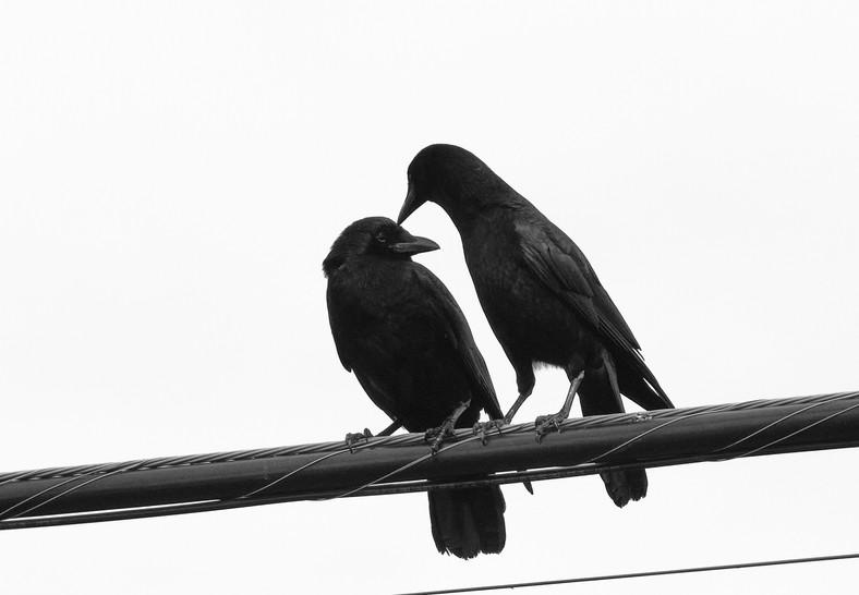 06 03 Evening Birds DSCF1567.jpg