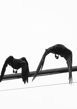 06 03 Evening Birds DSCF1584.jpg