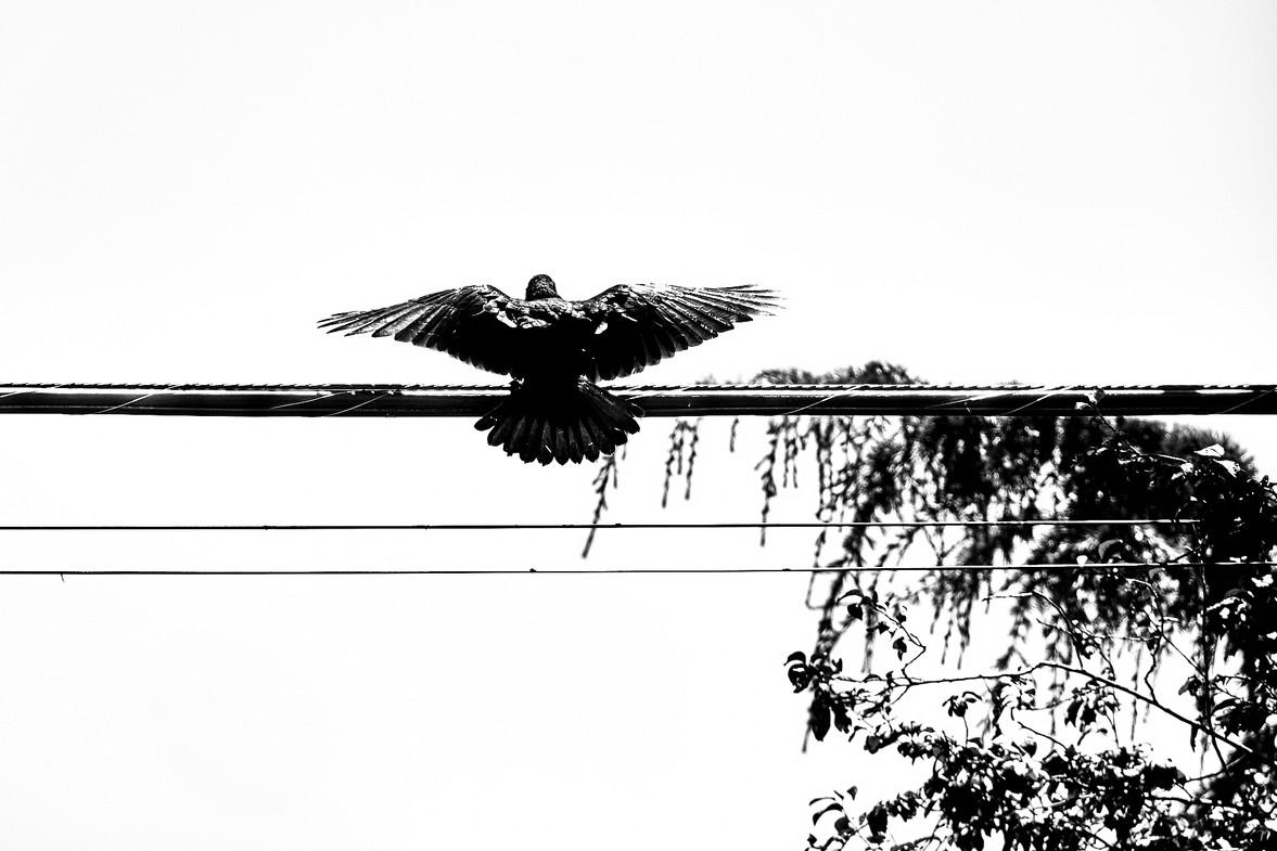 07 19 Crows _DSF4579.jpg