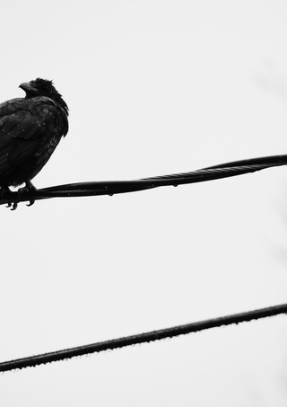 09 26 Rain Birds DSCF8607.jpg