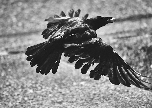 07 30 Yard Birds DSC_0276.jpg